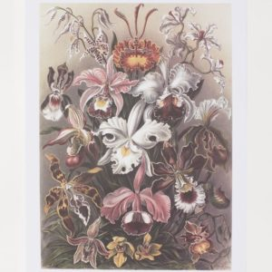vintage floral illustration print